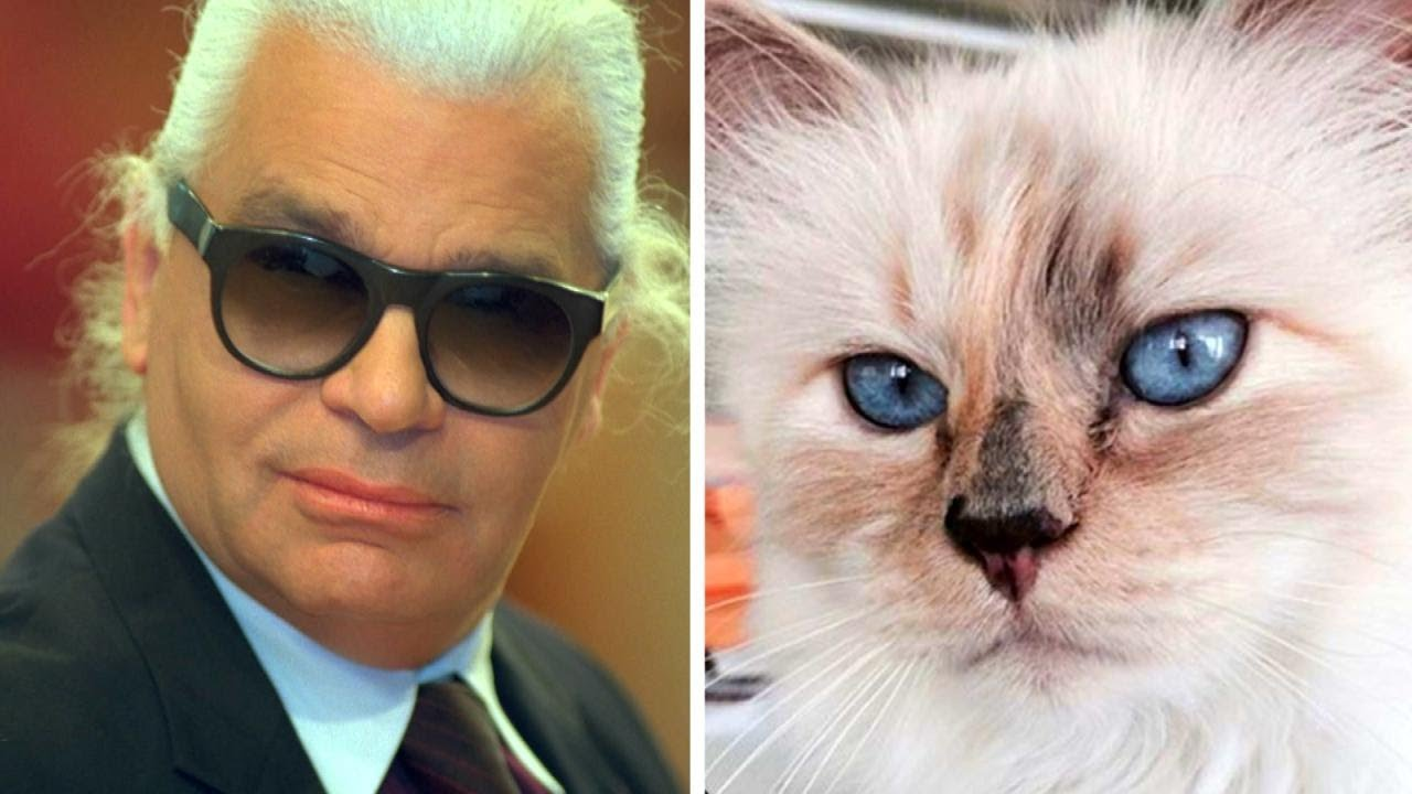 Karl Lagerfelds Cat Mourning Loss Of Owner Youtube