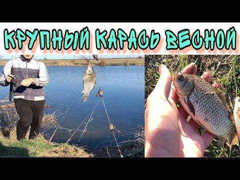Рыбалка на донку. ПЕРВЫЕ КАРАСИ 2020. Самая простая снасть +УБИЙЦА КАРАСЯ