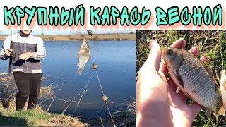 Рыбалка 2020 Секрет успешной ловли карася Весной 13 Марта Как ловить много карася