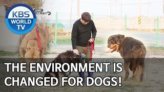The environment is totally changed for dogs! [Dogs are incredible/ENG/2020.03.31]