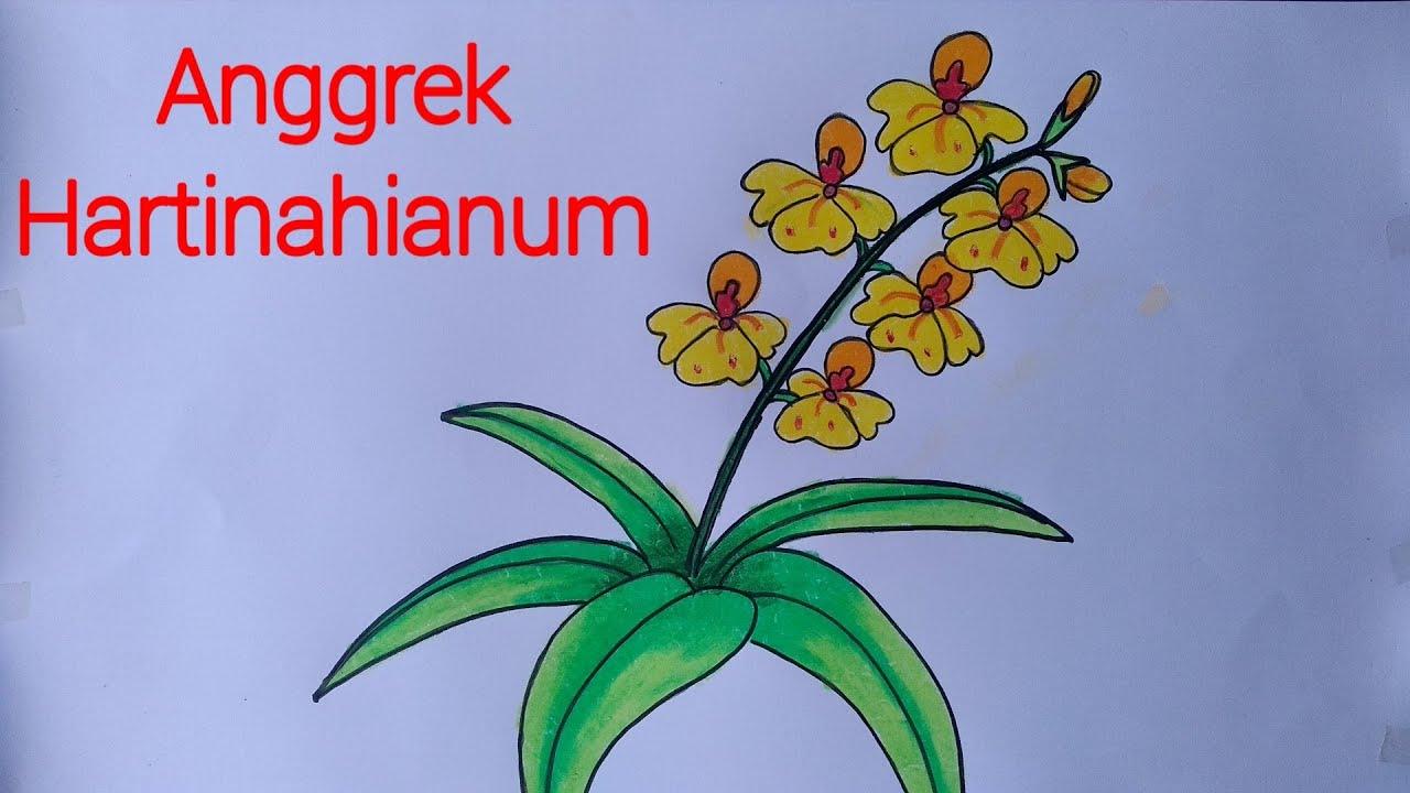 Cara menggambar bunga anggrek  yang mudah mewarnai dengan