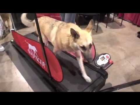 dogPACER™ at Vegas Pet Expo 2012