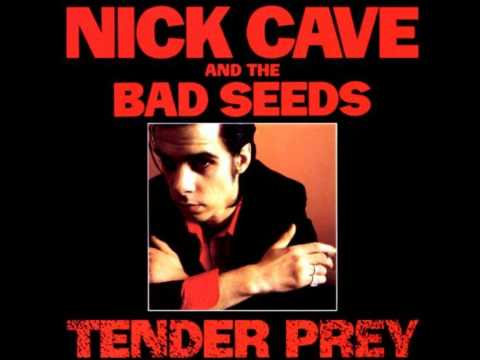 Nick cave the bad seeds city of refuge