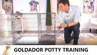 Goldador Potty Training from WorldFamous Dog Trainer Zak George  How to Potty Train Goldador Puppy