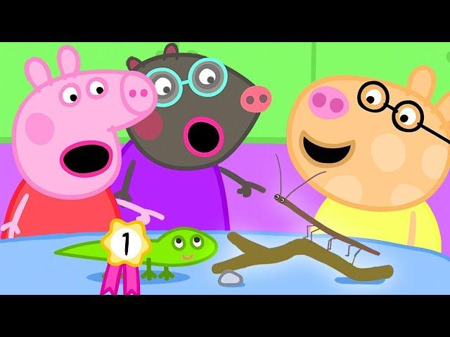 Peppa Pig Français 🐢 Le Concours D'animaux | Épisode Complet | Dessin Animé Pour Bébé