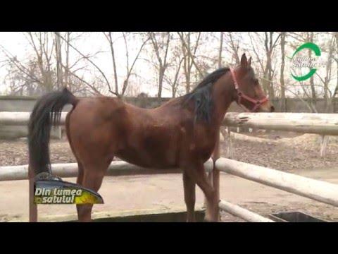 Hobby-ul cu cai şi ponei poate deveni si afacere