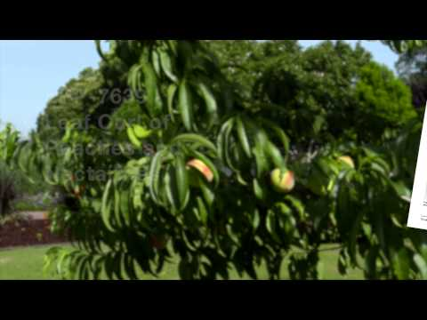 Common Fruit Tree Diseases