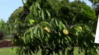 Common Fruit Tree Diseases