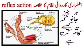 IN Hindi & Urdu [Reflex Action] and How to work it with perfect speech 2019