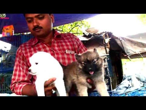 CUTE PUPPY DOG AT GALIFF STREET PET MARKET    LARGEST PET MARKET KOLKATA, INDIA     MARCH 2017 VISIT