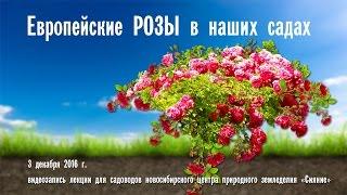 Европейские розы в наших садах