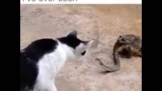 Змея + лягушка
