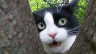 ЧЕРНО БЕЛЫЙ кот СТЁПКА 13