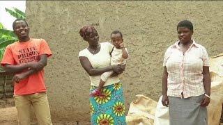 Rwanda, Des vaches de races pour 350.000 familles d'ici 2017