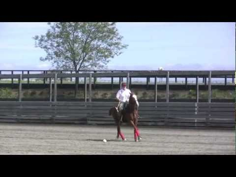 Learn To Ride And Play Polo In 90 Days