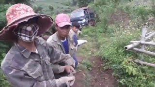 Thu hoạch sắn của người nông dân cái kết là đăng lòng ( đi rừng sinh tồn )