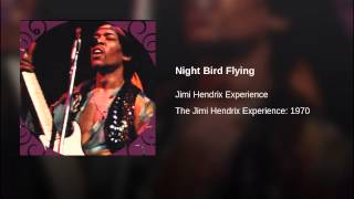Night Bird Flying