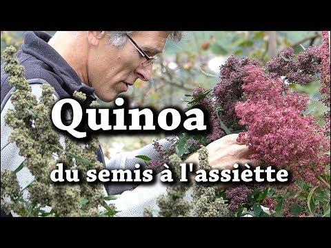Quinoa du Jardin : Semer, Cultiver, Récolter, Préparer et en Manger