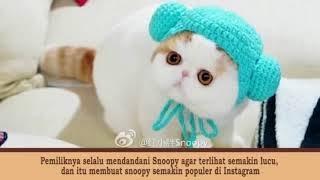 Video Gemes! 15 Akun Kucing Paling POPULER dan Ter-EKSIS Di Instagram Yang Wajib Kamu FOLLOW download MP3, 3GP, MP4, WEBM, AVI, FLV Februari 2018