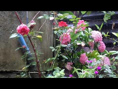 Nyanyian Hujan Di Antara Bunga-Bunga