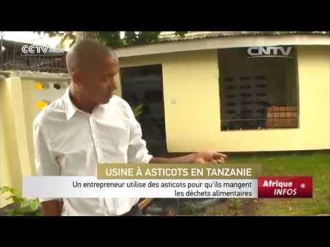 Un Entrepreneur Utilise Des Asticots Pour Qu'ils Mangent Les Déchets Alimentaires