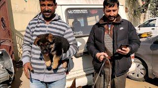 Wholesale Dog Market at Ambala Part-2.. 8813825366 - DOGGYZ WORLD