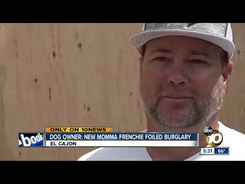 MORNING NEWS - Fierce Frenchie Foils Burglary In El Cajon