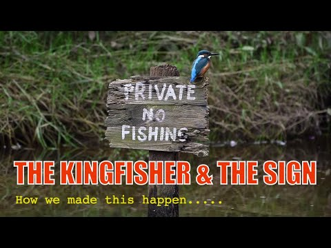 BIRD PHOTOGRAPHY-THE KINGFISHER AND THE SIGN. An Iconic Image