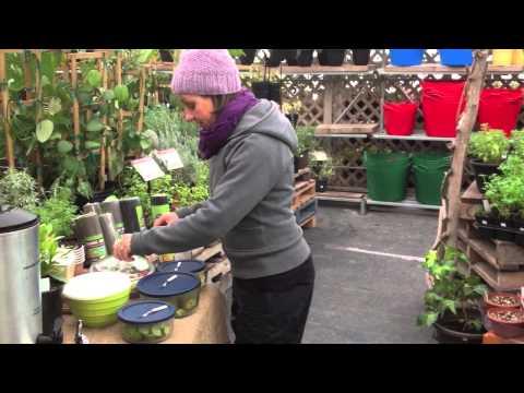 Miracle Fruit Taste-Testing, at Sage Garden