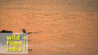 Wooden boat rowed down Hooghly river at sunset - West Bengal