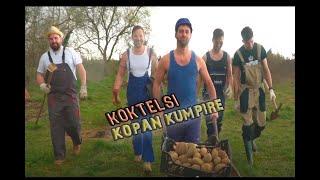® KOKTELSI - KOPAN KUMPIRE, BEREN JABUKE (Official Video FullHD) CMC Fest 2021