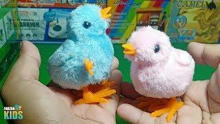 Mainan Anak Ayam Warna Warni, Ayam Loncat | Farzan Kids