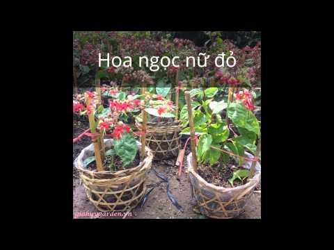 Các loài hoa cây cảnh có ở vườn cây cảnh gia huy