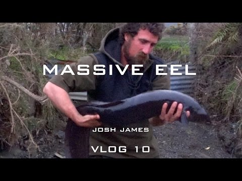 100 year old eel caught by hand