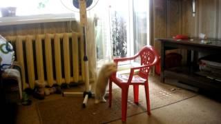 Охота на котенка Умку