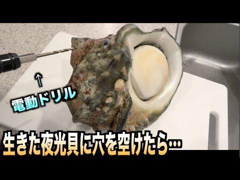 大事故!!最強の貝'夜光貝'にドリルで穴を開けたらニュルッと出てくるらしい