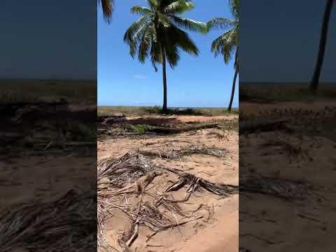Quadriciclo Praia Passeio de Quadriciclo do Gunga Litoral Sul Alagoas Parte 3