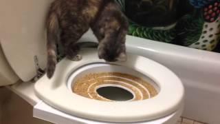 Rosie toilet training week 1