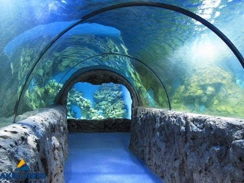 Океанариум в ТЦ РИО (Москва) Underwater World in Moscow