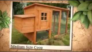 Chicken Huts - How To Build Backyard Chicken Coops
