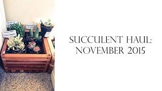 Succulent Haul: November 2015