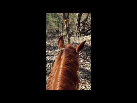 Duncan Lake New Years Trail Ride 2017