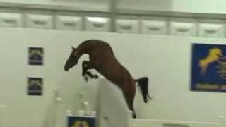 Un saut de fou une vidéo Animaux