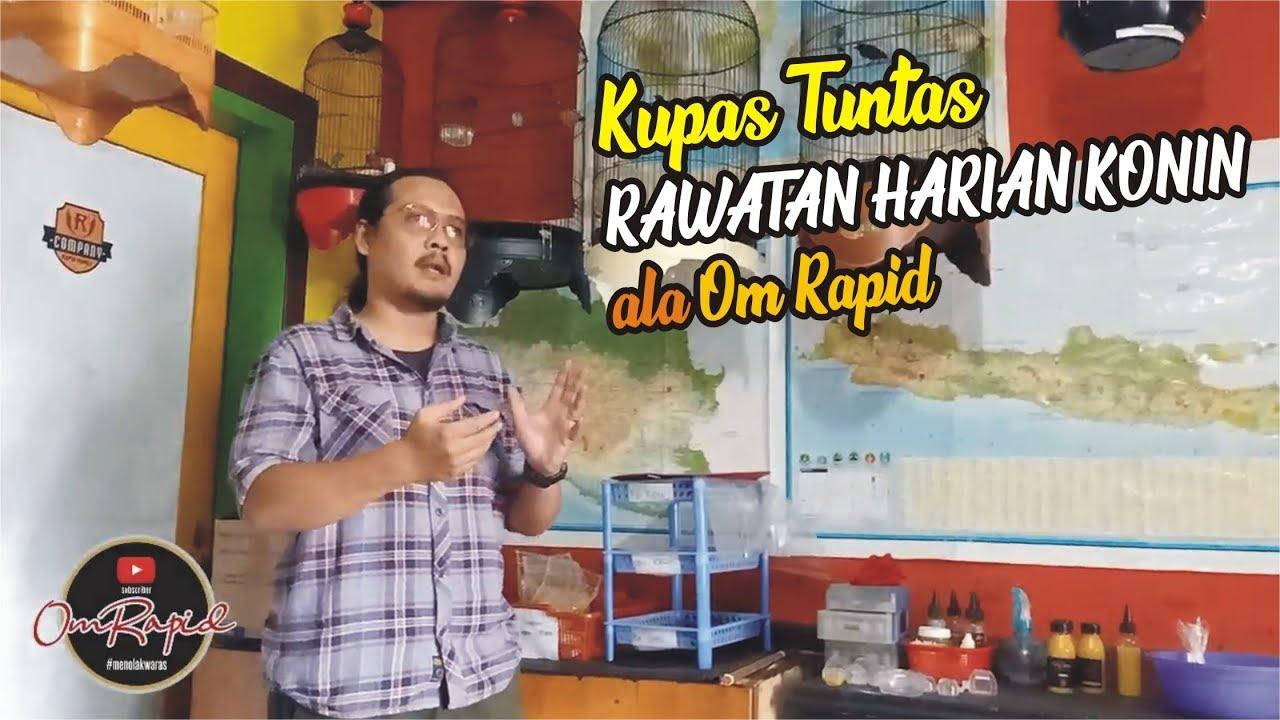 Rawatan Harian Konin Ala Om Rapid Kupas Tuntas Youtube