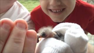 A Baby Bird, Fallen from the Nest