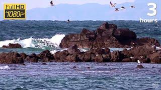 海鳥の鳴き声と波しぶきの映像3時間 / Song of birds and wave spray
