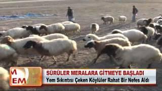 SÜRÜLER MERALARA GİTMEYE BAŞLADI 19.04.2012