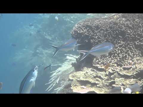 Death-Defying Cleaner Fish!