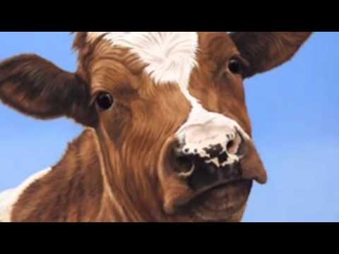 Resultado de imagem para brown cow