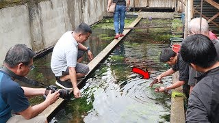 AMAZING Farm of IMPORTED AQUATIC PLANTS